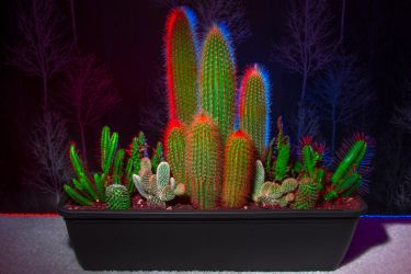 Home Cactus by TMProjection