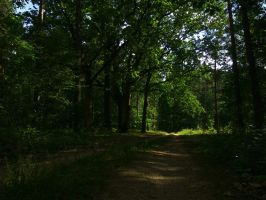 Somewhere in the middle of the forest by Rdzeniuch