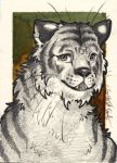 Tiger ACEO by CharlesDW