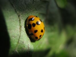 Lady Bug by pomchillasitems