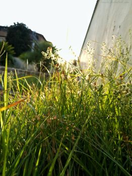 Sunset and grass by Rosshi