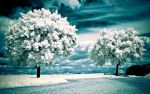 Spring 2560 Wallpaper by myINQI