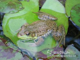 Liminal - Frog on a Lilypad by brightling