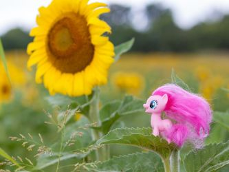 Pinkie Pie in a Sunflower Field by AquilaTEagle