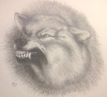 Growling Wolf by ckatt01
