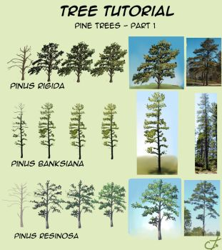 Tree tutorial - part 1 by Ctougas01