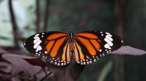 butterfly 4 by NickiStock