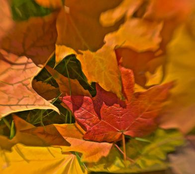 Autumn Leaves 1 by tnp651