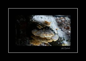 Winter again 4.... by gintautegitte69