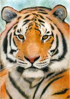 Siberian Tiger by photospider