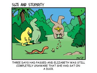 Duck by Size-And-Stupidity