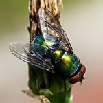 Fly on dying flower by MoonGazer9