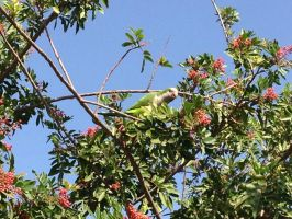 Green parrot by jomy10
