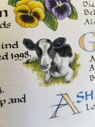 Calf illustration  by DetailsMatter