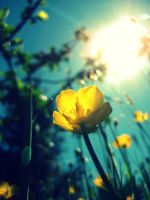 Buttercup by akrPhotography