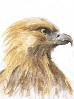 Golden Eagle by TheRyuOG