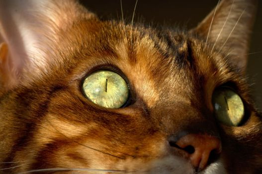 The Eye of the Bengal by FurLined