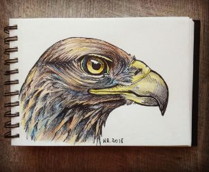 Eagle by Mimose91