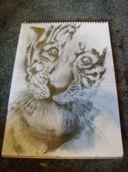 tiger... by pure1morning1scream
