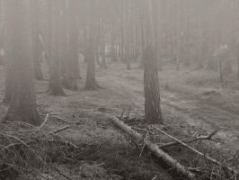 Myst Forest by sternenfern