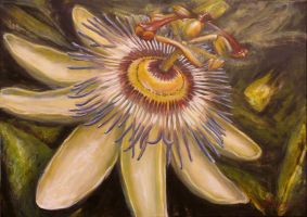 Passion flower by Ceridwens-gallery