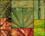Textures from Fall by alahay