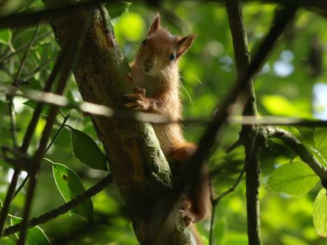 August 15 Squirrel by Taliesin-Neonblack