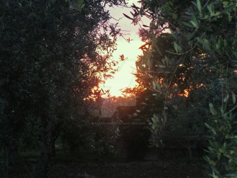 -Sunset and Olive Trees- by xSarahMagic