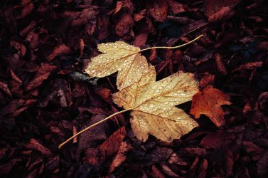 Autumn Remembrance VII. by realityDream