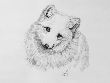 Arctic Fox by salt25