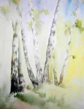 Birches by MagdalenaWolff