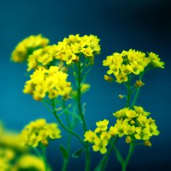 Yellow by j-adree