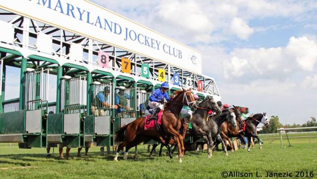 LADY BALTIMORE STAKES 2016 by Prairie-Bayou