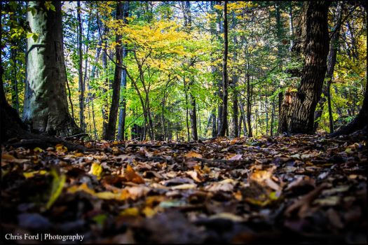 Autumn Path by OneLove2102