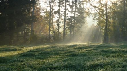 Enlighted Meadow 7 by SelvaStock