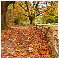Autumn Passage by Val-Faustino