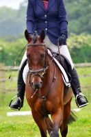 Dressage Stock 002 by HKW1994
