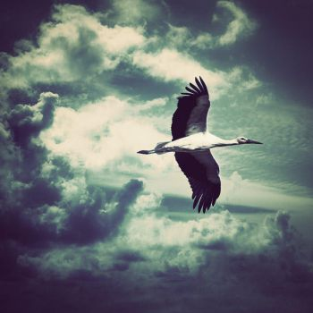 The free bird by ChristineAmat