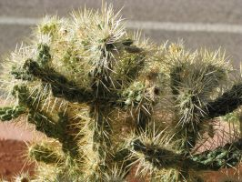 00179 - Prickly Cactus by emstock