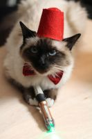 Dr who cat by dandlit