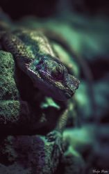 Reptile by EveVictus