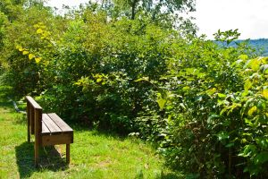 A Bench With No View by quintmckown