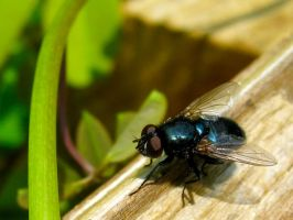My Fly 2 by KealeS