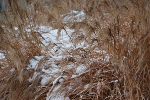 snow in the grass by allsock