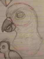 Sun Conure by DrippingStarDust