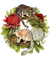 Australian Wreath by oxpecker