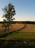 Phone: Evening Fields by MLgraphy