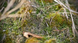 bed of moss by blackasmodeus