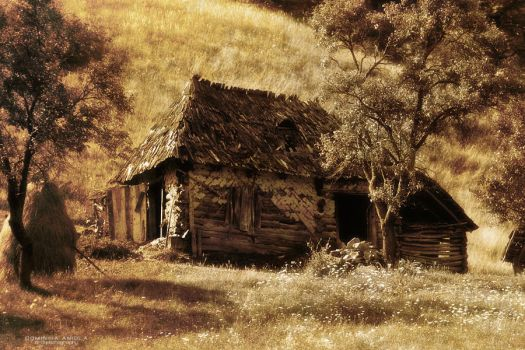 Country life by DominikaAniola