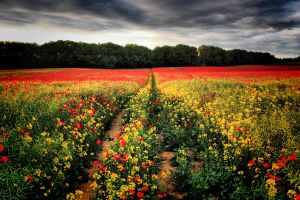 Yellow and Red by ChrisDonohoe